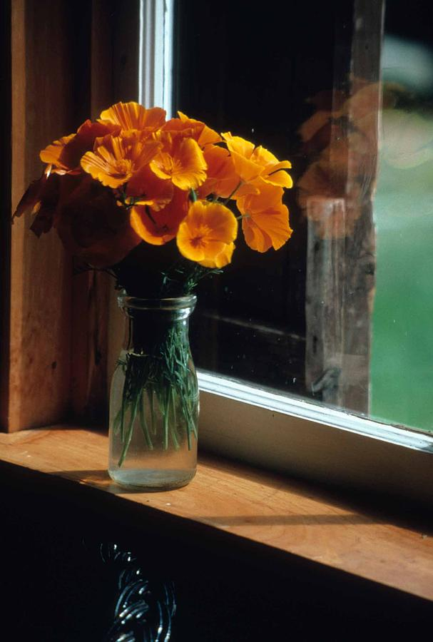 Poppies Photograph - Maine Windowsill by Laurie Paci