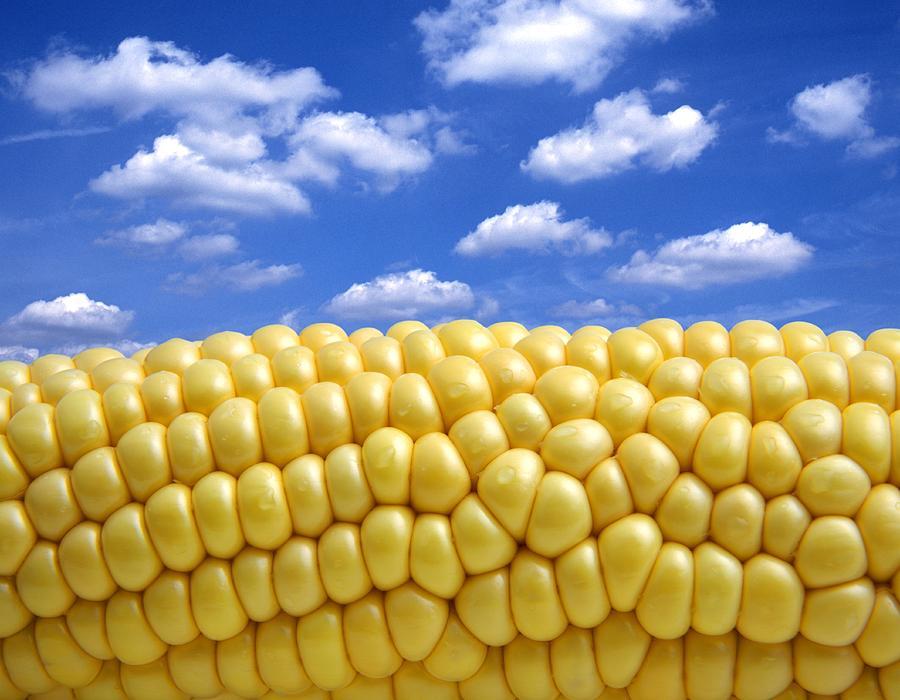 Agriculture Photograph - Maize by Victor De Schwanberg