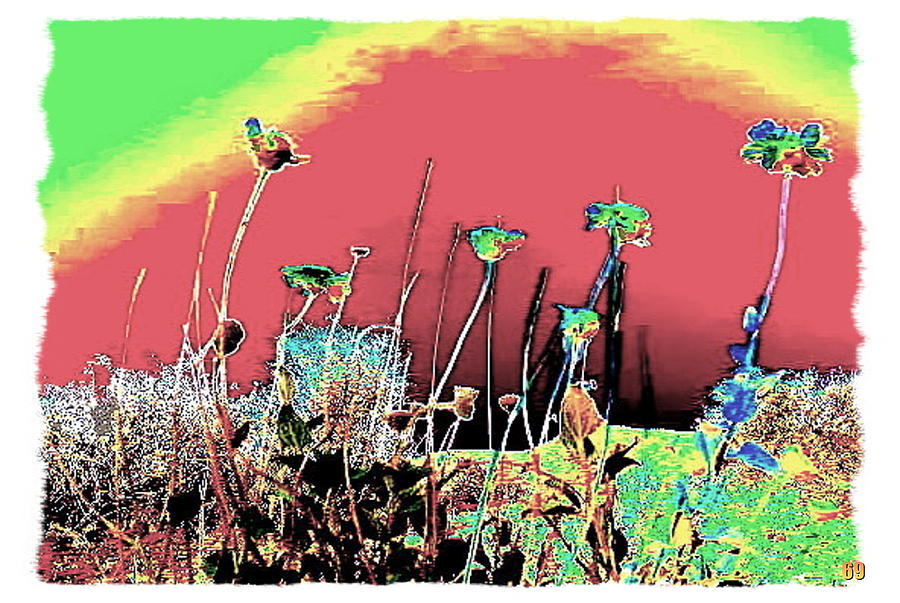 Landscape Photograph - Majave Desert  Rainbow  Flowers by James Rutledge