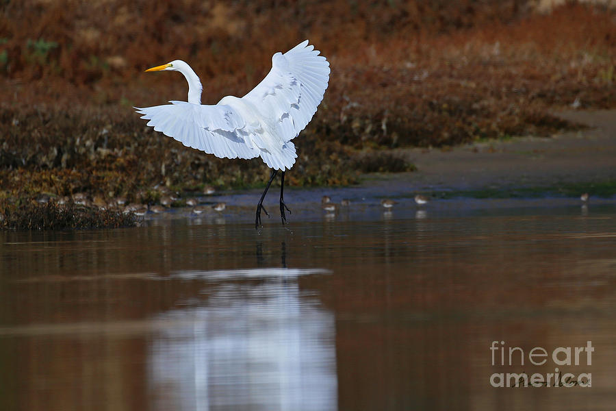 MAJESTIC REFLECTIONS by Alison Salome