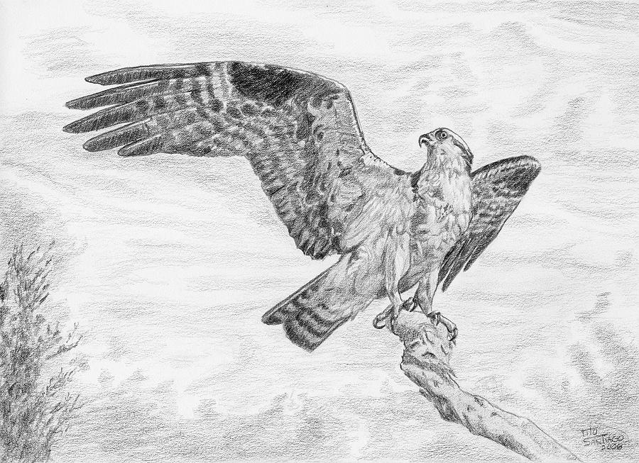 Animals Drawing - Majestic by Tito Santiago