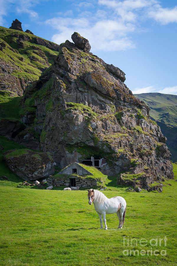 Majestic White Horse Photograph