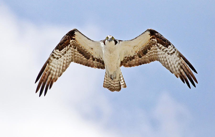 Hawk Photograph - Make My Day by James Steele