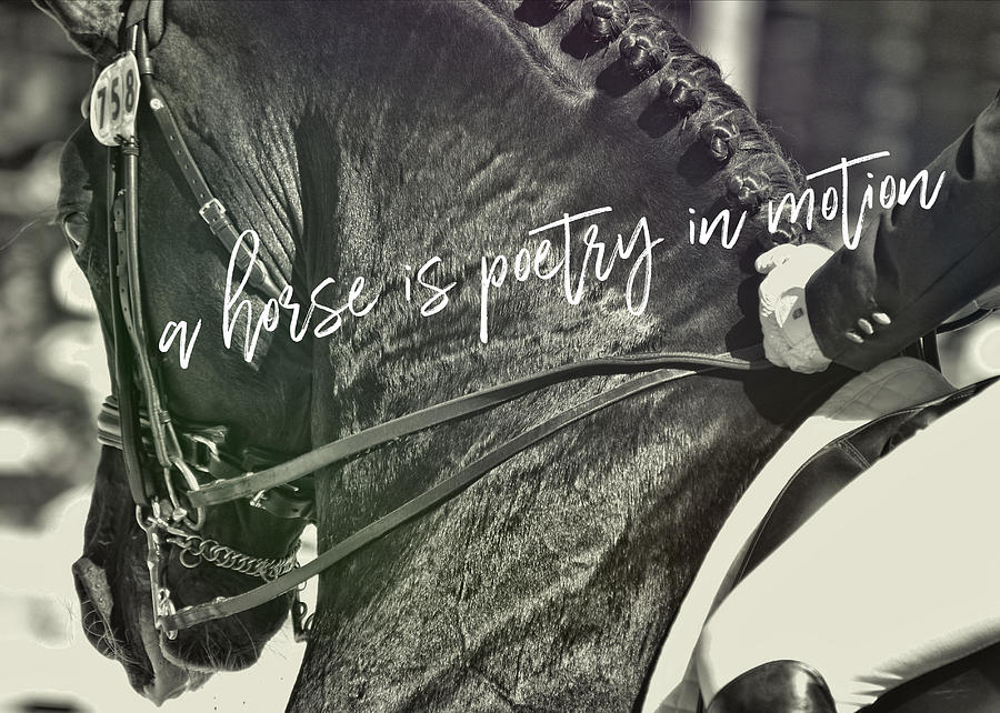Horse Photograph - Make The Connection Quote  by JAMART Photography