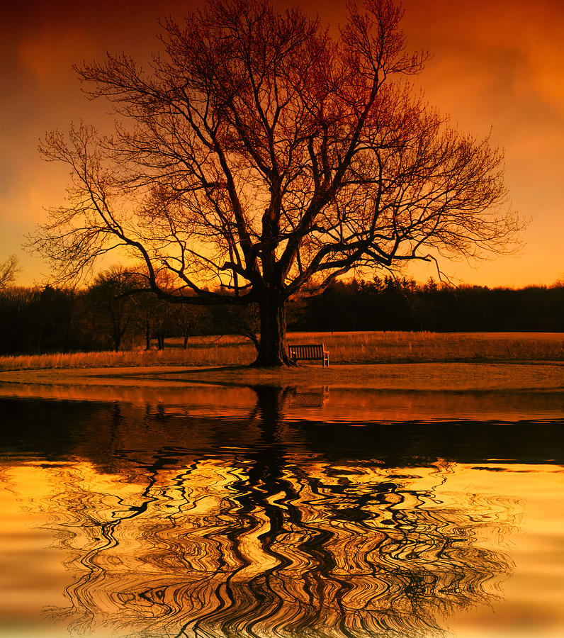 Tree Photograph - Making The Most Of Your Time Alone by Daphne Sampson