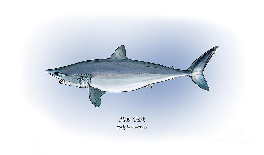 Mako Shark Painting - Mako Shark by Ralph Martens
