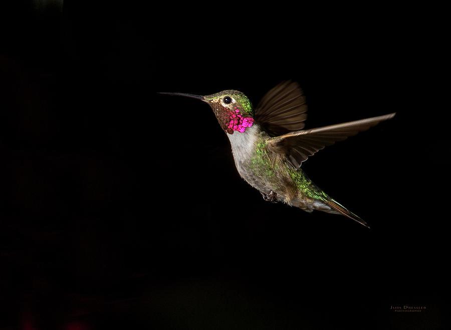 Hummingbird Photograph - Male Broad-tailed Hummingbird by Judi Dressler