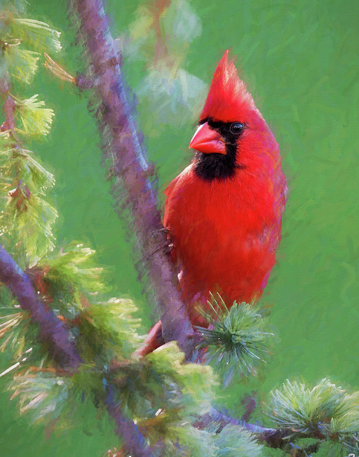Bird Photograph - Male Cardinal by Jerry Deutsch