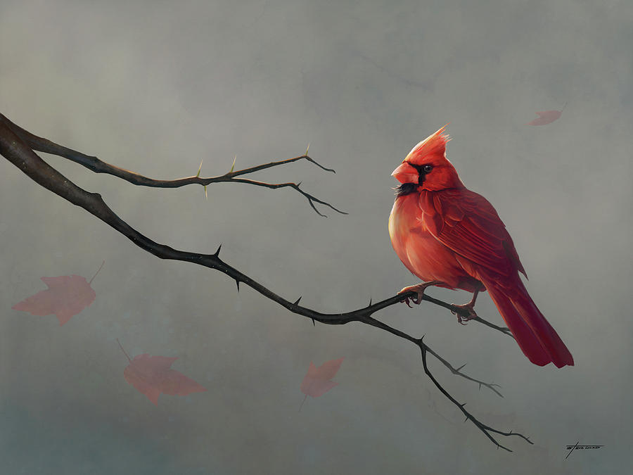 Male Cardinal by Steve Goad