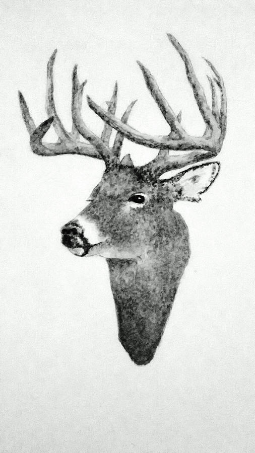Animals Drawing - Male Deer - Black and White by Michael Vigliotti