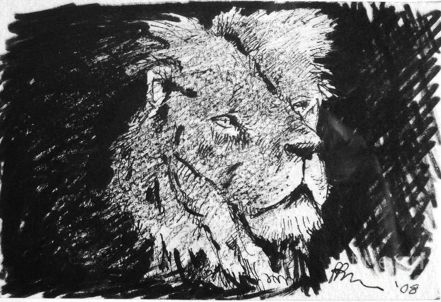Male Lion Portrait Drawing by Paul Miller