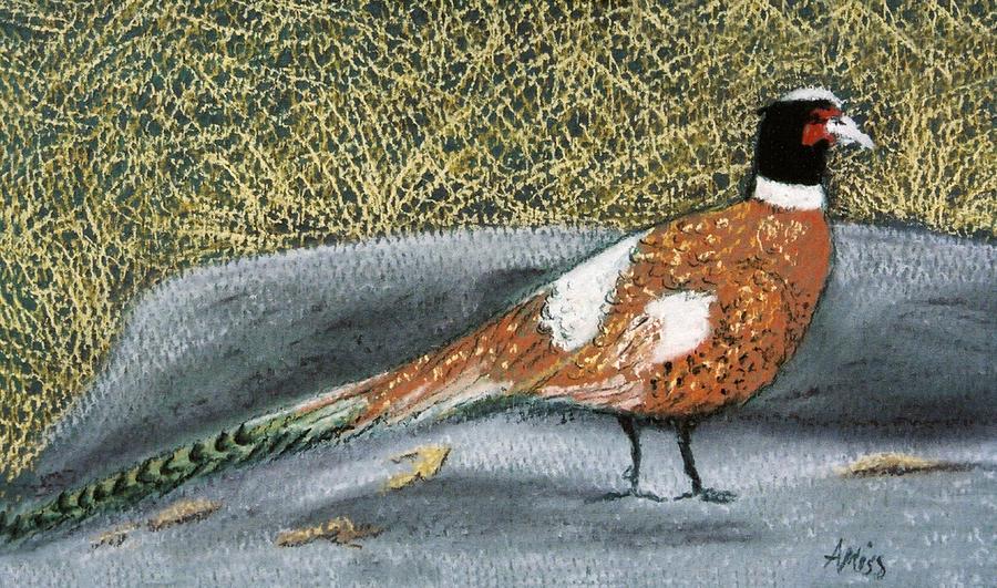 Birds Pastel - Male Pheasant by Jan Amiss