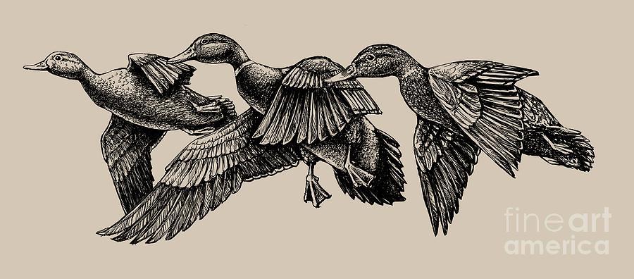 Mallard ducks in flight BW by Rob Corsetti
