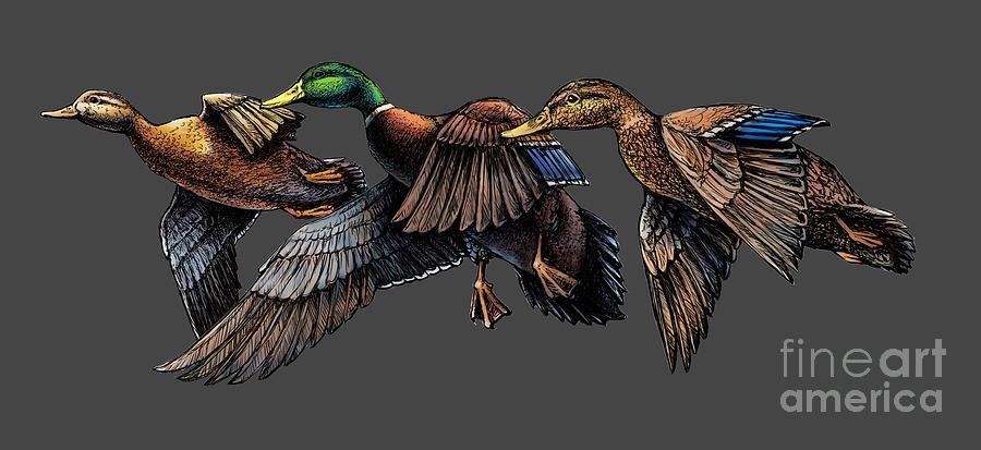 Mallard ducks in flight by Rob Corsetti