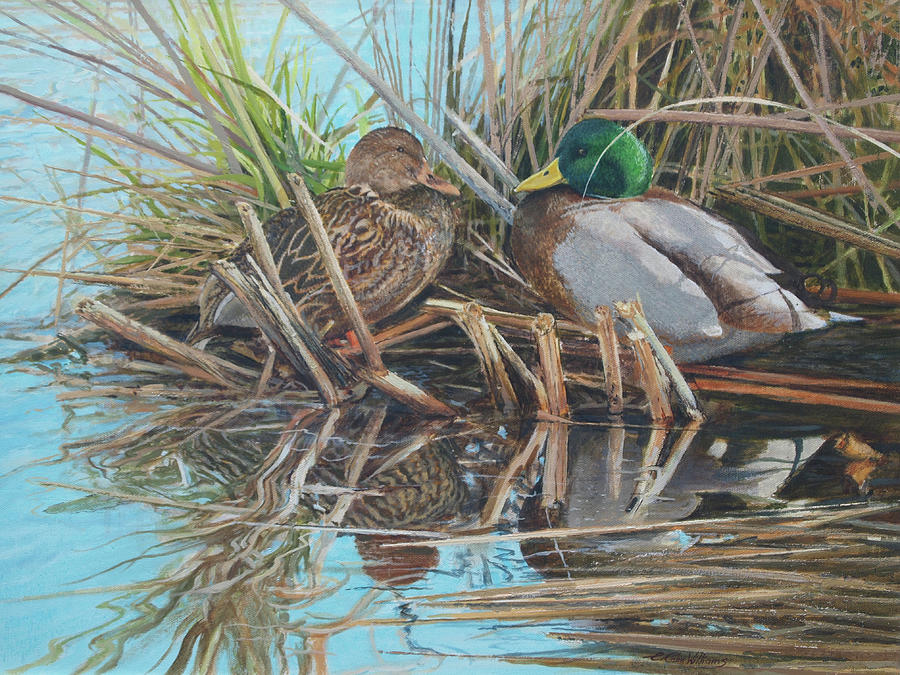 Mallards at Rithet's Bog by E Colin Williams ARCA