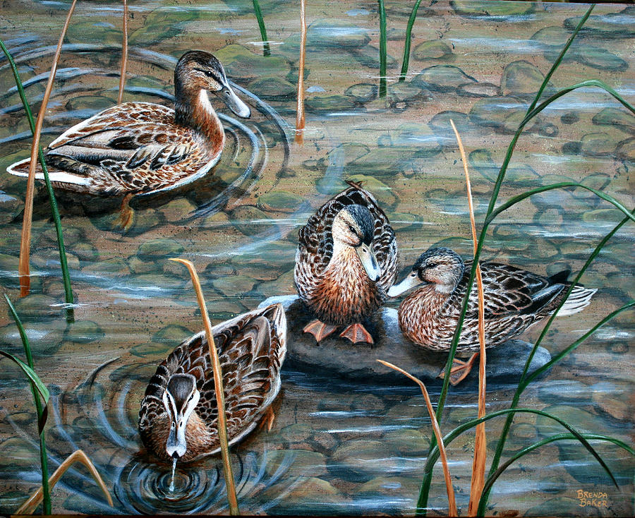 Mallards Painting - Mallards by Brenda Baker