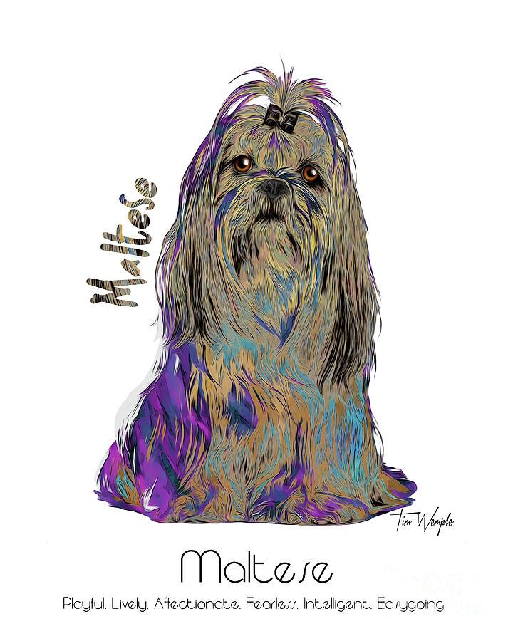 Maltese Digital Art - Maltese Pop Art by Tim Wemple