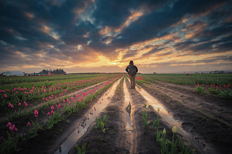 Travel Photograph - Man Watching Sunrise In Tulip Field by William Freebilly photography
