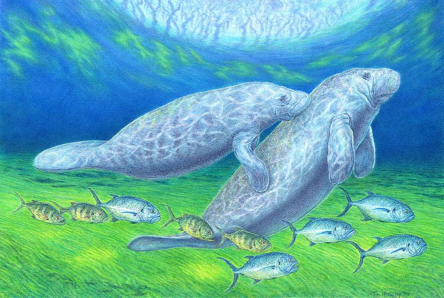 Florida  Drawing - Manatee Spring by Tim McCarthy