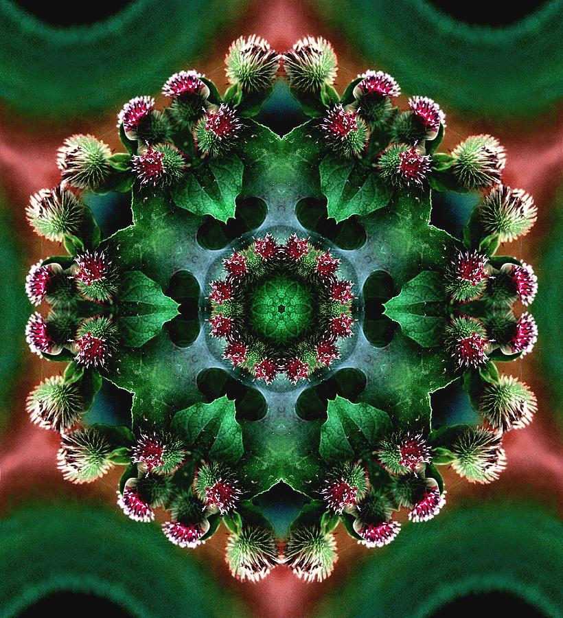 Plants Photograph - Mandala Bull Thistle by Nancy Griswold