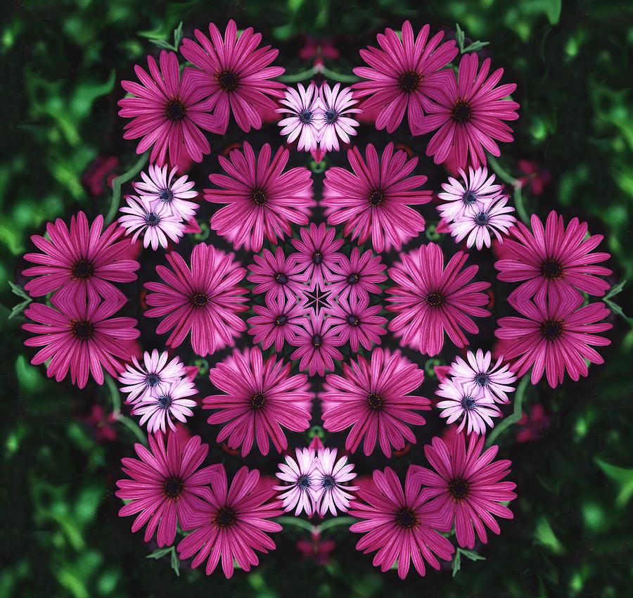 Mandala Photograph - Mandala Mum Rosas by Nancy Griswold