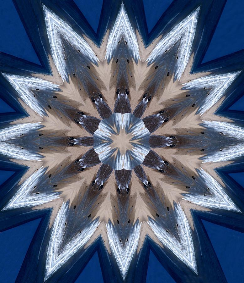Mandala Photograph - Mandala Sea Star by Nancy Griswold