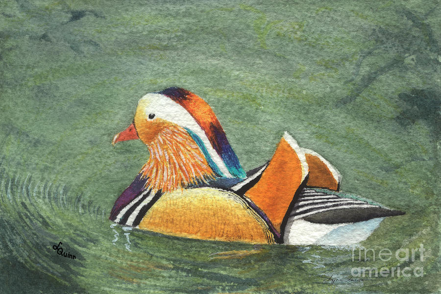 Duck Painting - Mandarin Duck by Lynn Quinn