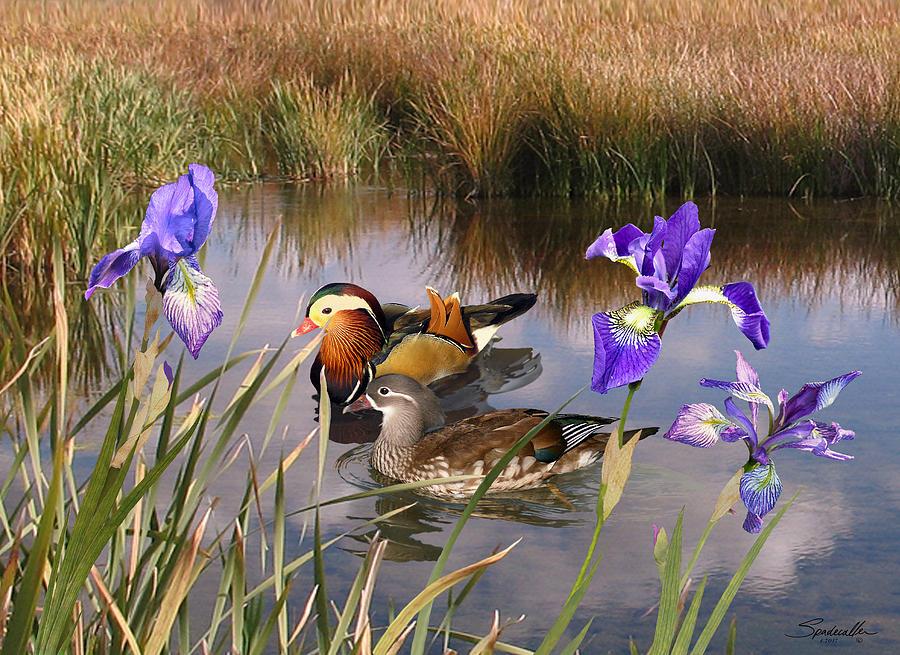 Mandarin Ducks and Wild Iris by M Spadecaller