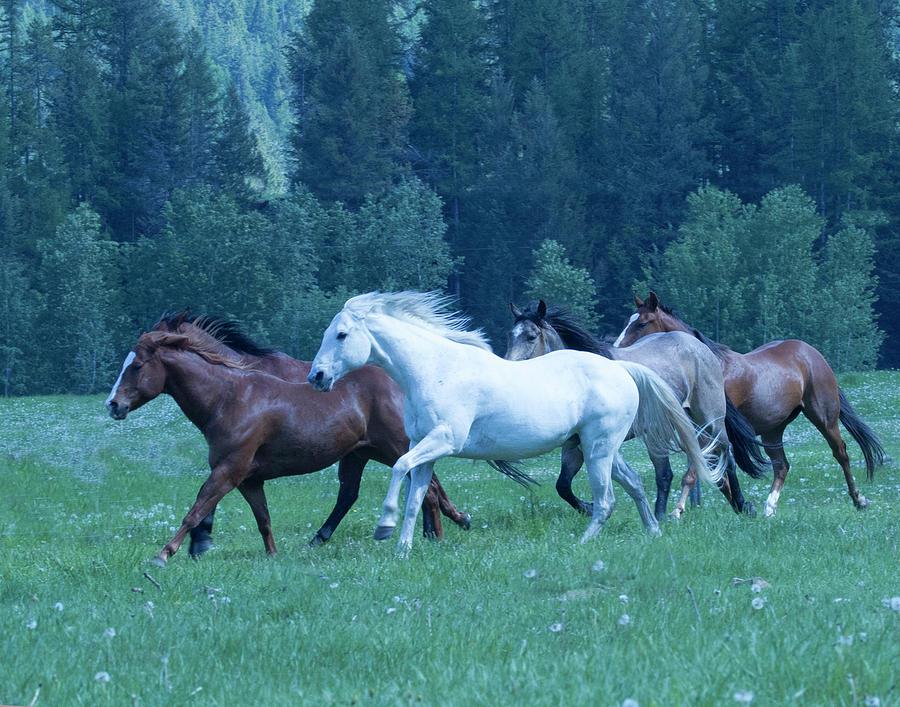 Horses Photograph - Manes Aflying by Eleszabeth McNeel