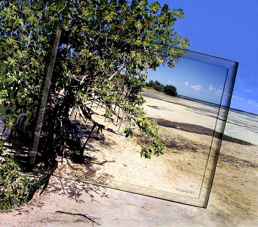 Beach Photograph - Mangrove Shore Off Center by Michael Albin