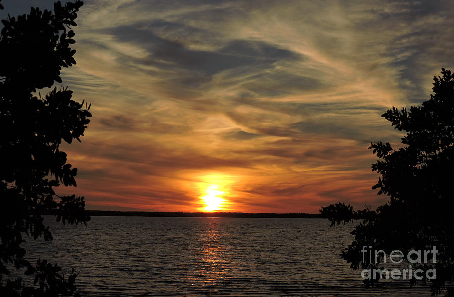 Sunset Photograph - Mangrove Sunset by Marilee Noland