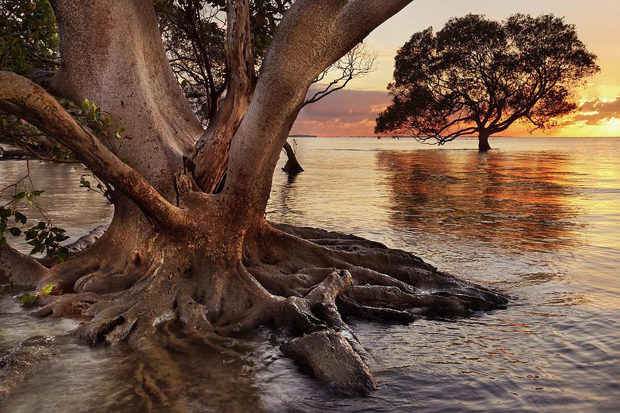 Mangrove Trees Photograph
