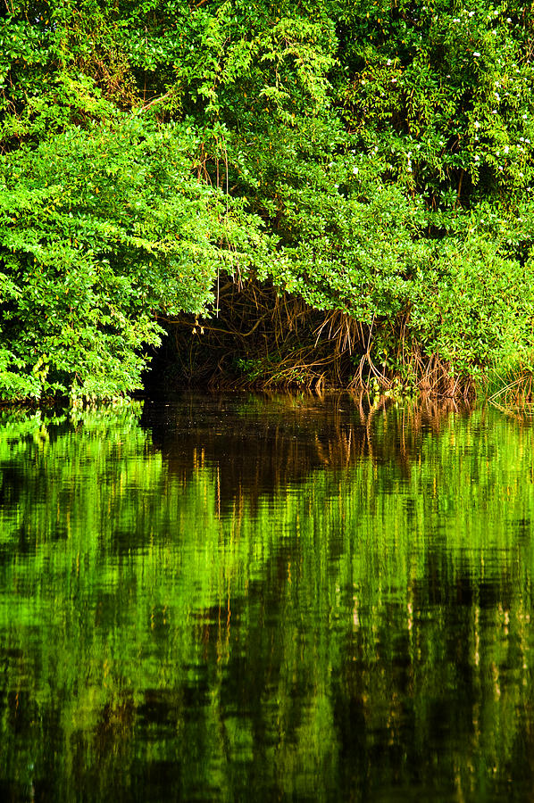 Mangrove Photograph - Mangrove Tunnel by Sarita Rampersad