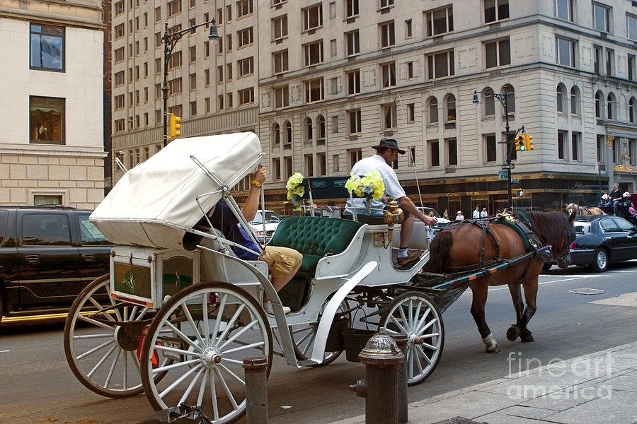 Buggy Photograph - Manhattan Buggy Ride by Madeline Ellis