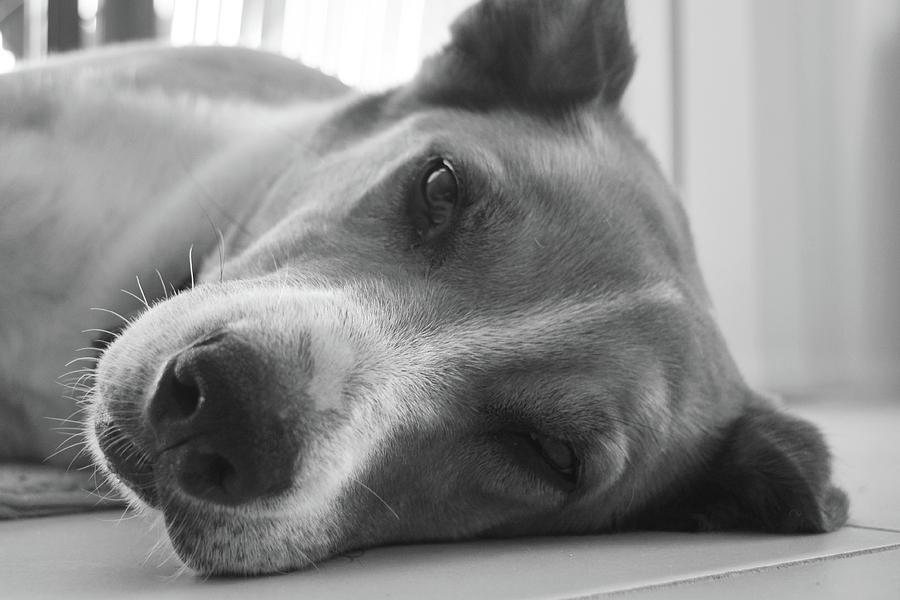 Dog Photograph - Mans Best Friend by Luke Rice