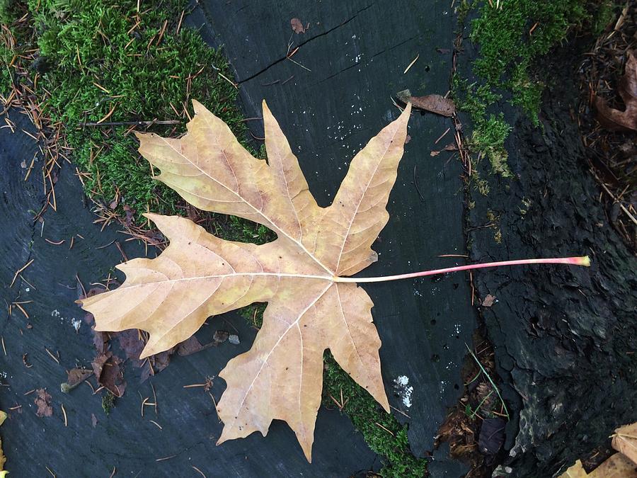 Maple Leaf Eh by Travis Crockart