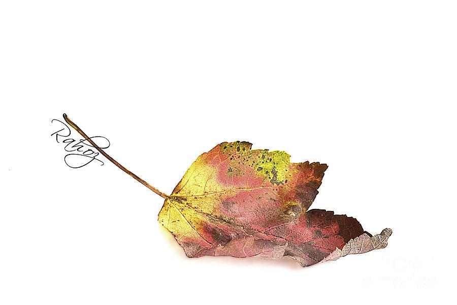 Autumn Photograph - Maple Leaf by Rahat Iram