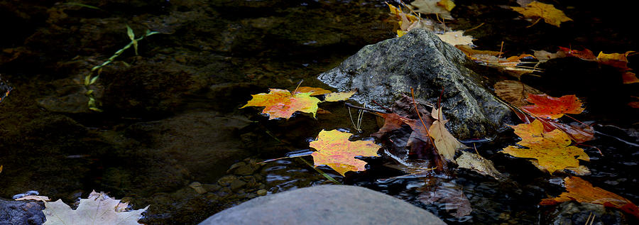 Landscape Photograph - Maple Leaves-0006 by Sean Shaw