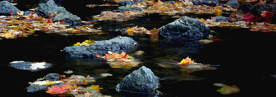 Landscape Photograph - Maple Leaves-0008 by Sean Shaw