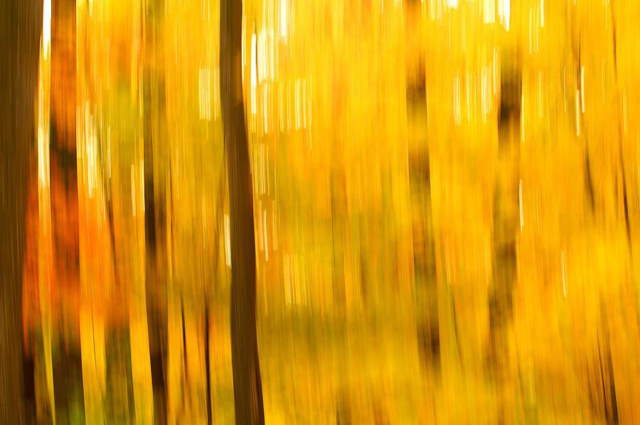 Maple Photograph - Maple Magic by Bill Morgenstern