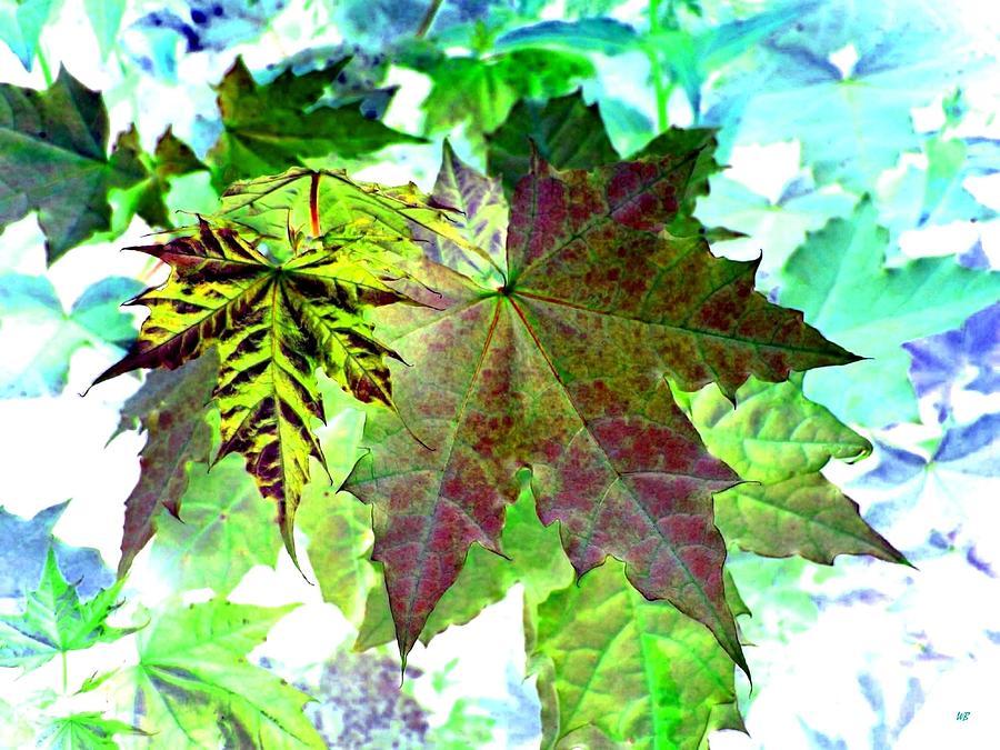Maple Leaves Digital Art - Maple Mania 24 by Will Borden