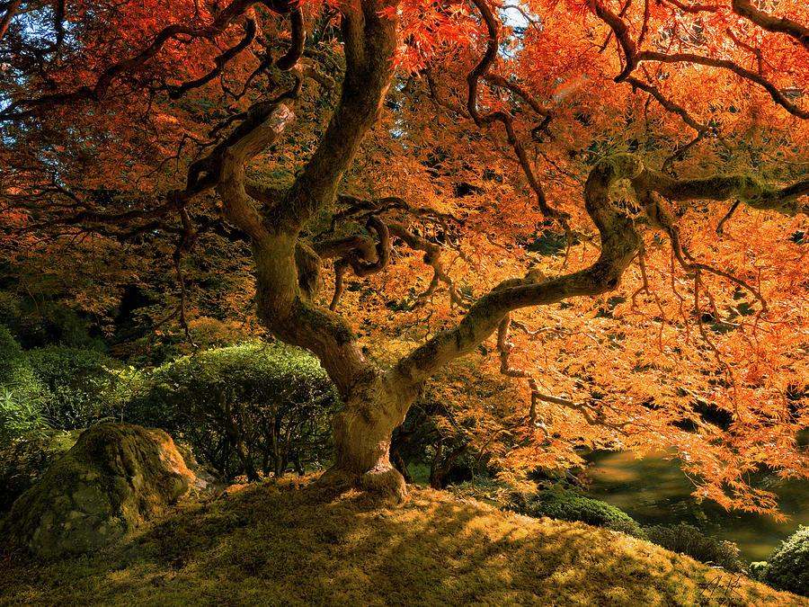 Maples Presentation Photograph