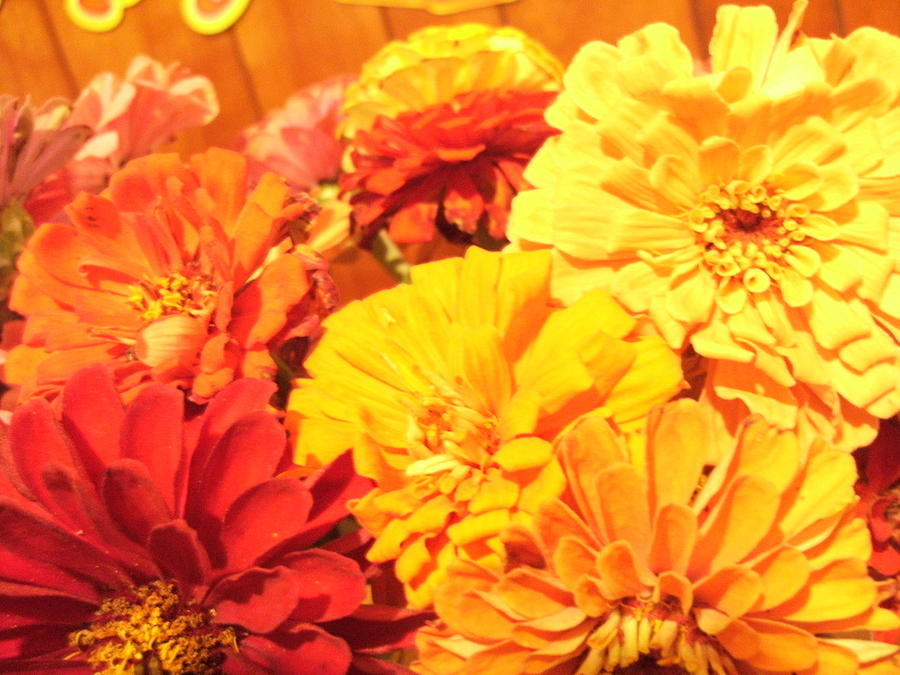 Marigold Photograph - Mar Aaah  Golds by Bob Smith
