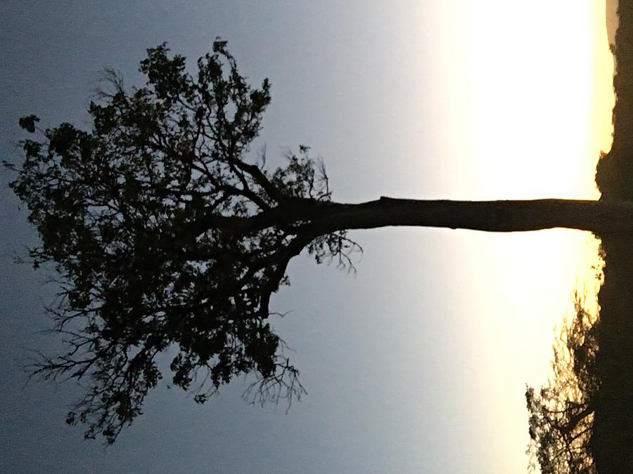 Sunet Photograph - Mara Sunset by Assen Photography