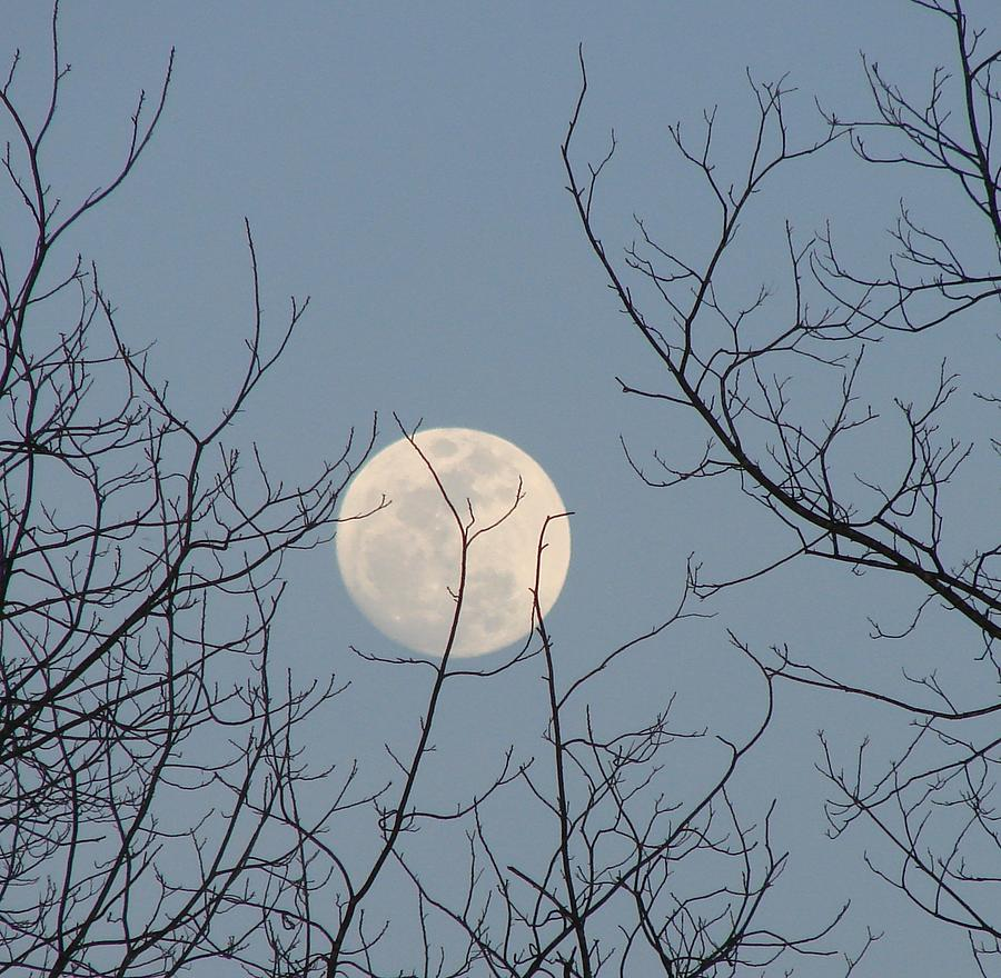 Moon Photograph - March Moon by Liz Vernand