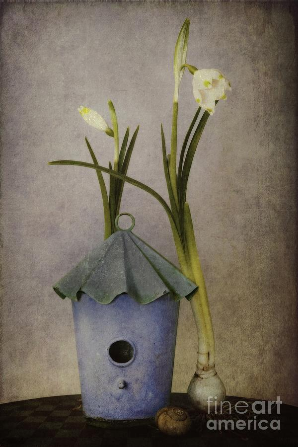 Still Life Photograph - March by Priska Wettstein