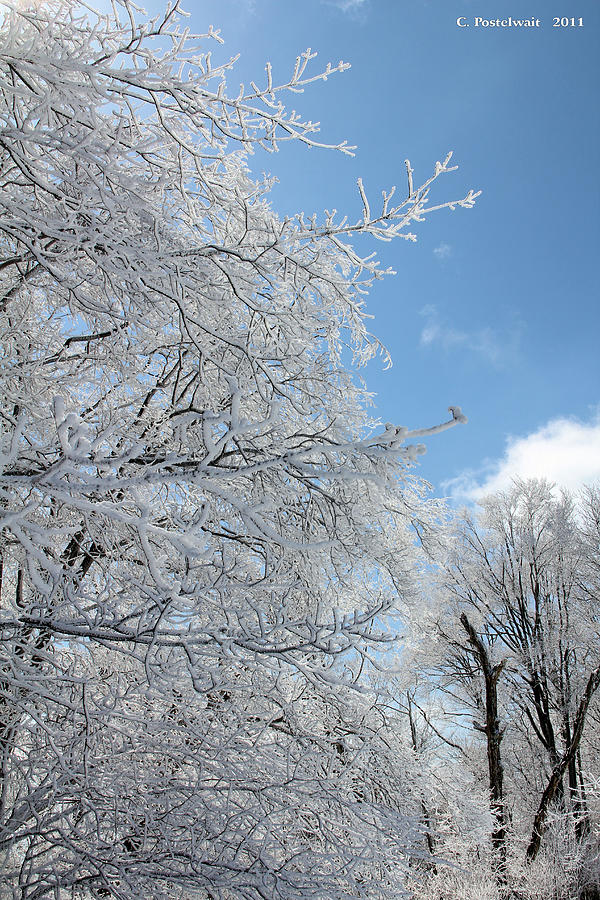 Trees Photograph - March Winters  by Carolyn Postelwait