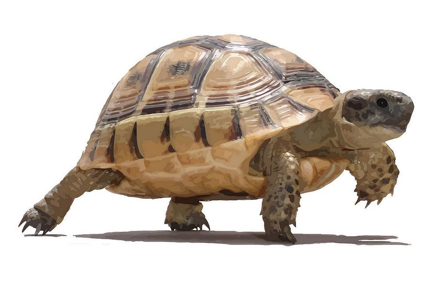 Marching Baby Tortoise Cartoon Vector Isolated Painting by