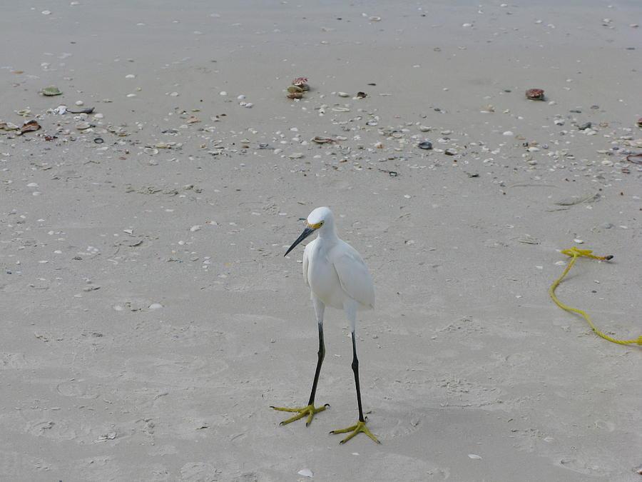Marco Island FL Beach Bird by Arthur English