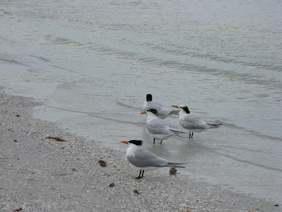 Marco Island FL Beach Birds Photograph by Arthur English